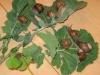 botanik_08_g